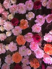 (_Fidelio_) Tags: iphone7plus display greatneck flowers
