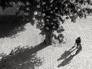 Le marronnier The chestnut tree