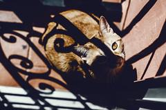 Birra (DANG3Rphotos) Tags: birra cat gato miau shadow shadows cats nikon d7100 nikonista dang3rphotos dang3r creative look vision style creativo imagen photo 2015 shot camera inspiration ver like this photos foto fotografia love art artist life light lights valencia