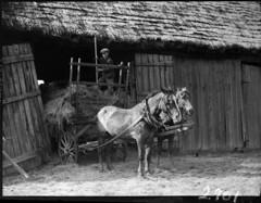 Boy with a pitchfork on a haymow on a horse-drawn cart, Quebec / Garçon muni d'une fourche dans un tas de foin, sur une charrette tirée par des chevaux, Québec (BiblioArchives / LibraryArchives) Tags: lac bac libraryandarchivescanada bibliothèqueetarchivescanada canada canada150 québec quebec boy garçon pitchfork fourche haymow tasdefoin horses chevaux wagon charrette barn grange cliffordmjohnston 1929