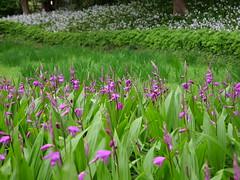 P1004253 (digitalbear) Tags: panasonic lumix gh5 sumida river kiyosumi garden eidai bridge tokyo japan sharehotel lyuro skytree fukagawameshi miyako yakatabune