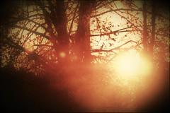 let the sun into your heart (camerito) Tags: warm light morning morgen morgensonne sun sunrays sunbeams sonnenstrahlen silhouettes silhouetten leaves blätter trees bäume warmes licht camerito nikon1 j4 flickr