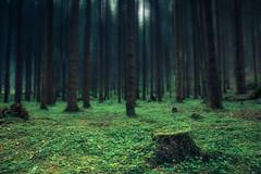 (raimundl79) Tags: wow wald exploreme explore fotographie flickrr flickrexploreme follow4follow image forest photographie austria österreich vorarlberg myexplorer montafon nikon nikond800 bestpicture photoshop tamron2470mm