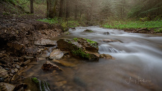 A Rainy Afternoon Along Hayden Creek