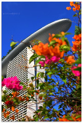 Wave below the surf - 1210453 (willfire) Tags: willfire singapore open outdoor street marina bay sands cantilever surf board underneath colour wave flower bouganvilla blue sky cloudless