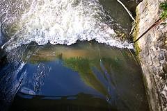Algues vives (mifranc91) Tags: 820 algues d700 essonne light lumière nikon1 rivière water