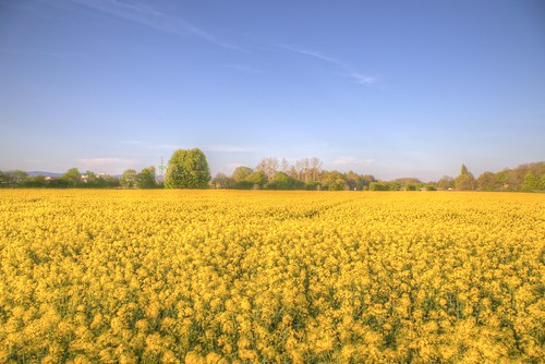 Yellow Delights