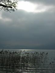 DSCN6337 (phildepacht) Tags: lac annecy roseaux ciel