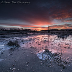A Cold Sunrise (.Brian Kerr Photography.) Tags: scotland scottish scottishlandscapes scottishborders scotspirit frozen tree grass frost winter ice cold coldmorning sunrise visitscotland dgwgo dumfriesandgalloway castledouglas threavecastle briankerrphotography briankerrphoto outdoor outdoorphotography nature naturallandscape natural colour sony a7rii availablelight water landscape sky