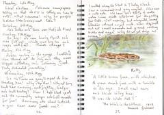 Water Vole (Hornbeam Arts) Tags: sketch journal stort ratty kennethgrahame