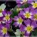 fiori_0478