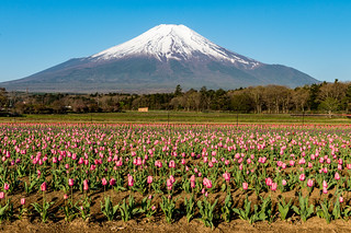 2017 Fuji and flowers