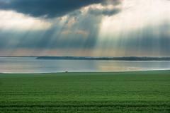 Light (Samkogz) Tags: nikon d7100 nature light landscape colors water grass green sweden malmö malmoe spring