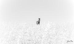 RELAX (jfran_cordoba) Tags: ngc sony alpha3000 1855mm caballo nature campo byn hourse