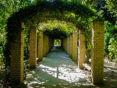 Symmetric Path [Explored] (Tassos Giannouris) Tags: symmetric path green nature greece athens garden plants walk straight