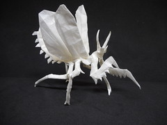 Pseudocreobotra Wahlbergii (Bart Davids) Tags: insect bug origami paper fold praying flying spine flower mantis super complex crease pattern 64x64 64 box pleat pleating