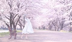 Sakura Harmony (のの♪) Tags: dd dollfiedream cherryblossom