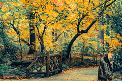 Should I take this turn..? (purva_82) Tags: canon autumn centralparknyc park centralpark road fall