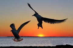 White Flat (DeadDogsEye) Tags: plymouth400 plymouthmassachusetts400 plymouth massachusetts ocean orange deaddogseye sunrise sunset sky southshore seagulls