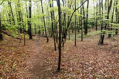 20160514 (Homemade) Tags: trees path trail forest woods preserve eastwoodspreserve poundridge westchestercounty westchesterlandtrust ny newyork nature sonydscrx100 poundridgelandconservatory prlc