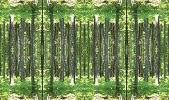 In Between that which is Green (rhonda_lansky) Tags: green mystical daydream place surreal fantasy glean mesmerizing racine wisconsin michigan photographicart forest forestart greenart lansky rhondalansky plants creations formations nature design abstractart visual plant abstractoutdoors outdoor mirroredshapes mirroredabstract mirrorart symmetryart symmetrical symmetricalart symmetryartist symmetricalartist earth expressive abstractplant organicpattern texture art abstract foliage rhonda pattern organic poems shortstories storys writing dreams tree trees