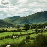 Buttermere sheep thumbnail