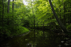 Quantico Creek (dzmears) Tags: tree trees green water creek river quantico stump trail forest park prince william