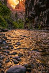 Golden Zion Narrows (NettyA) Tags: 2017 canyon sonya7r thenarrows usa utah virginriver zionnarrows zionnationalpark travel goldenlight river rocks cliff slotcanyon