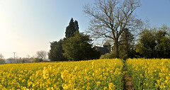 THE WAY TO THE CHURCH (chris .p) Tags: ashfordcarbonell shropshire england nikon d610 view spring 2017 path church stmarys april capture field rapeseed yellow trees landscape