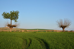 Trova le differenze - Find the differences. (sinetempore) Tags: trovaledifferenze findthedifferences alberi trees bialbero casorzo natura nature erba grass campagna countryside gelso mulberry ciliegio cherrytree