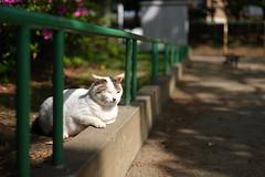 Morning (Yakinik) Tags: gf 63mm f28 r wr japan 日本 tokyo 東京 yakinik 富士フイルム fujifilm gfx 50s ねこ 猫 ネコ neko cat