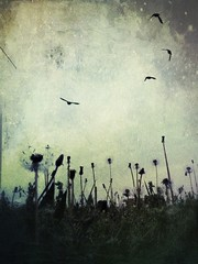 (rioazul82) Tags: iphoneart phonephotography texture birds dandelions
