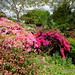 Scotney Castle Gardens