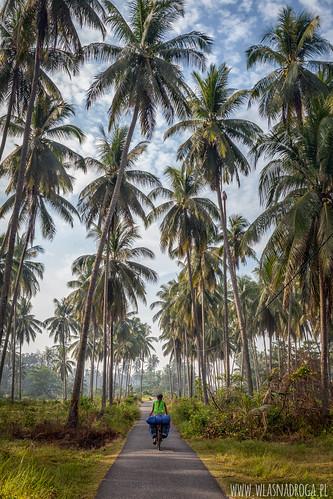 Palmowe aleje