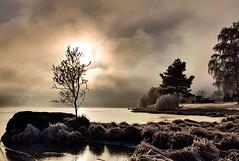 The Burning Tree (John Alexander Stang) Tags: lensflareremoved slowexposure noruega raw tripod iphone6splus norway norge buskerud modum vinter invierno wintertime sol sun cortexcamapp
