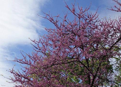 """Spring Fling • <a style=""""font-size:0.8em;"""" href=""""http://www.flickr.com/photos/52364684@N03/33777259354/"""" target=""""_blank"""">View on Flickr</a>"""