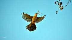 A Worlwide Event (vgphotoz) Tags: vgphotoz itstradition mom love wings arizona usa bird artandcraft mothersday aworldwideevent freedomofexpression fugitivemoment ngc marculescueugendreamsoflightportal npc