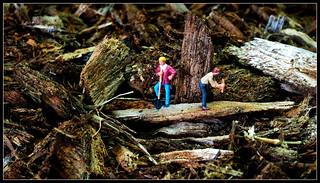 Macro Mondays -into the woods