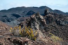 New world (LynxDaemon) Tags: isabella vegetation new growth volcano active black rocks apocalyptic