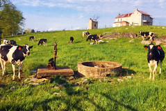 Scotland Pennsylvania Farm (Andrew Aliferis) Tags: cows field farm scotland pennsylvania andrew andy aga aliferis house