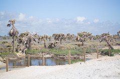 DSC00070.jpg (liangjinjian) Tags: florida marineland palmcoast usa geo:lat=2963807833 geo:lon=8119948500 geotagged 美国