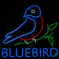 Neon Bluebird (ahockley) Tags: seattle bird bluebird neon neonsigns signs washington