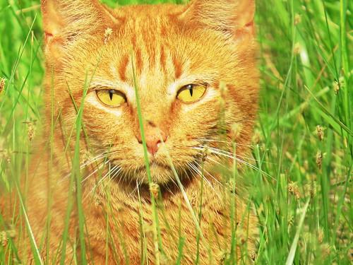 A feral cat @ #BeechGrovePark feeling #Intense.