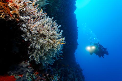 Malediven UW 2009
