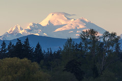 Mount Baker (mfeingol) Tags: washington skagit skagitwildlifearea wdfw mountbaker alpenglow
