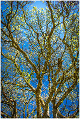 Tree (Nogegg) Tags: alone amateur away nature warm new beginner beautiful yellow trees dream tree forest time blue reflection first nikon spring countryside green orange cloud clouds summer sun morning