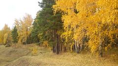 Syksy (Hermaeus) Tags: syksy autumn forest metsä