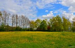 Fleurs Landscape (JaapCom) Tags: jaapcom landscape landschaft landed flowers fleurs flowering flour trees zalk dutchnetherlands clouds natural paardebloemen farmhouse hollanda holland
