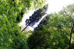 DSC_2623 (oria77) Tags: dolina bolechowicka krakow valley woodland poland