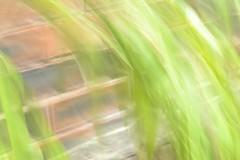 Bamboo Breeze (harrybobs58) Tags: macromondaysthemecamerablurbamboobreeze